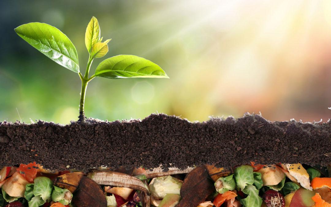 Organic Energy statt Abfallwirtschaft