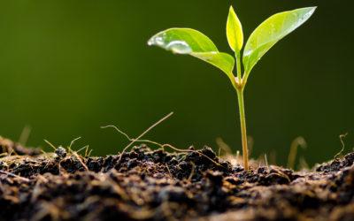 Kompostierung 2.0: Humusaufbau und grüne Energie mit Rentabilität